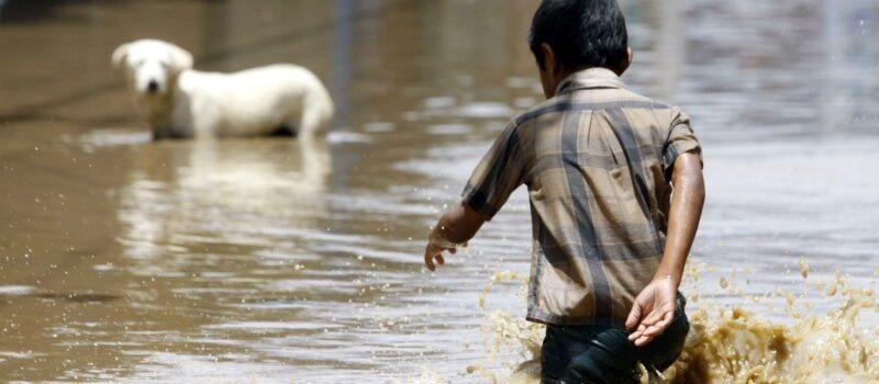 Cómo contribuir al rescate animal